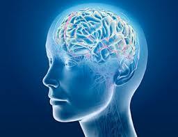 meditacao_cerebro